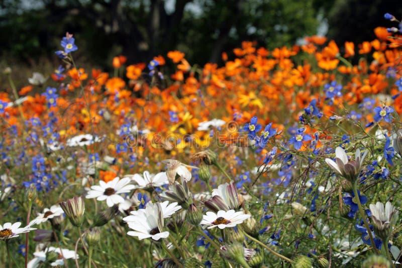 De weide van bloemen stock foto's