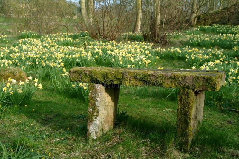 De Weide van de gele narcis, Schotland royalty-vrije stock fotografie