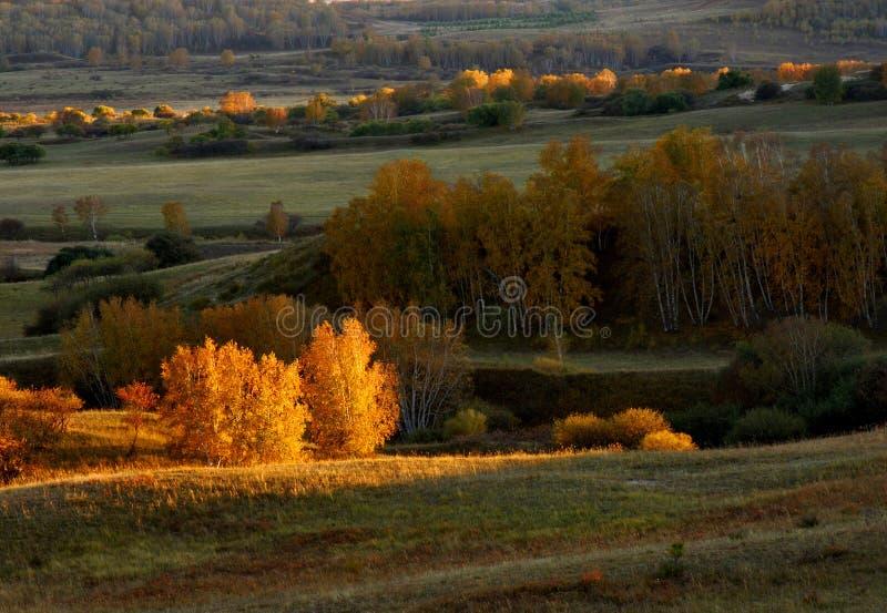 De weide van de herfst royalty-vrije stock fotografie