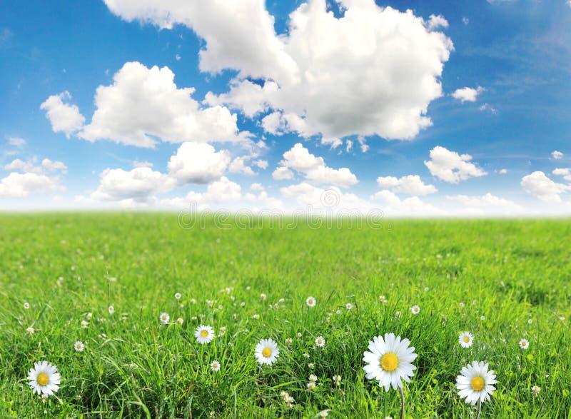 De weide van de lente stock afbeeldingen