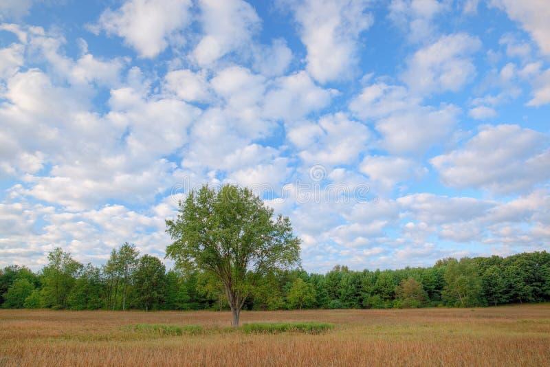 Download De Weide van de zomer stock afbeelding. Afbeelding bestaande uit zonsopgang - 10777609
