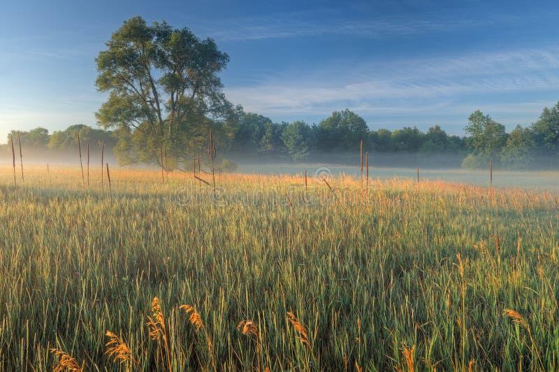 Download De Weide Van De Zomer In Mist Stock Afbeelding - Afbeelding bestaande uit gebied, weide: 10777553