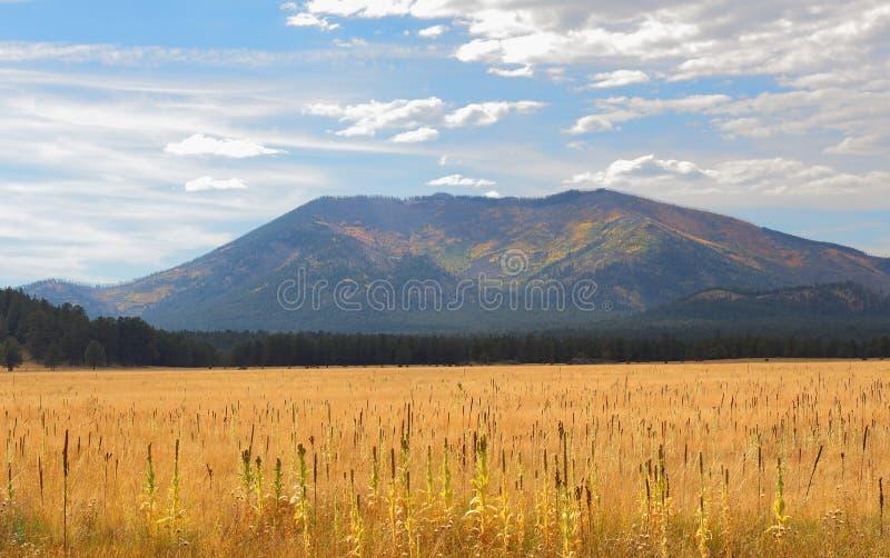 De weide van het open land in de herfst royalty-vrije stock afbeeldingen