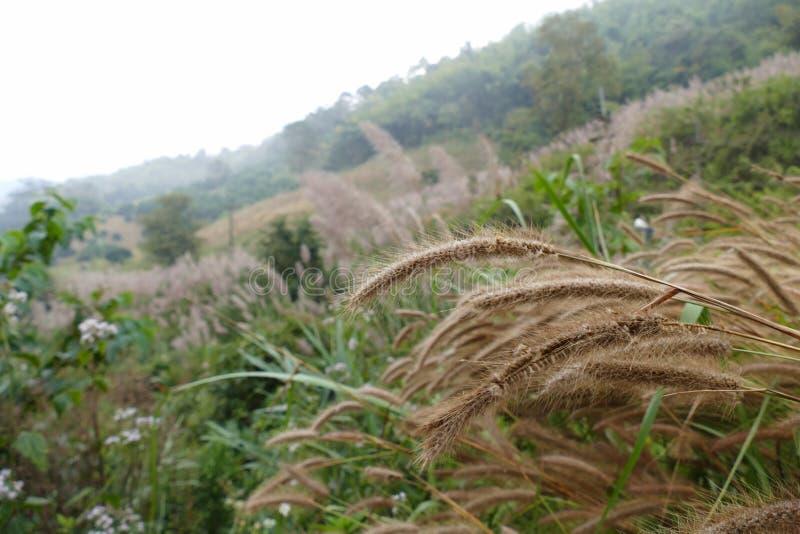 De weide van het Poaceaegras op de heuvel stock foto's