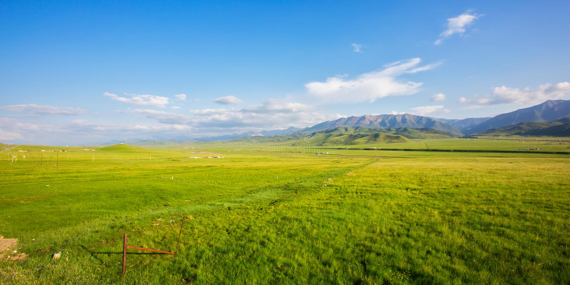 De weide van het Qilianplateau in de zomer royalty-vrije stock fotografie