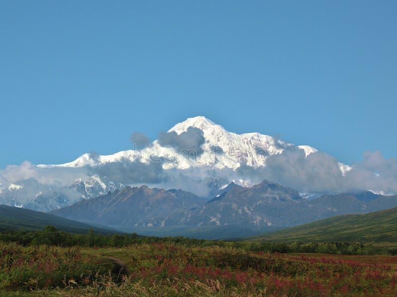 De weide van het wilgeroosje voor Mt. McKinley stock foto