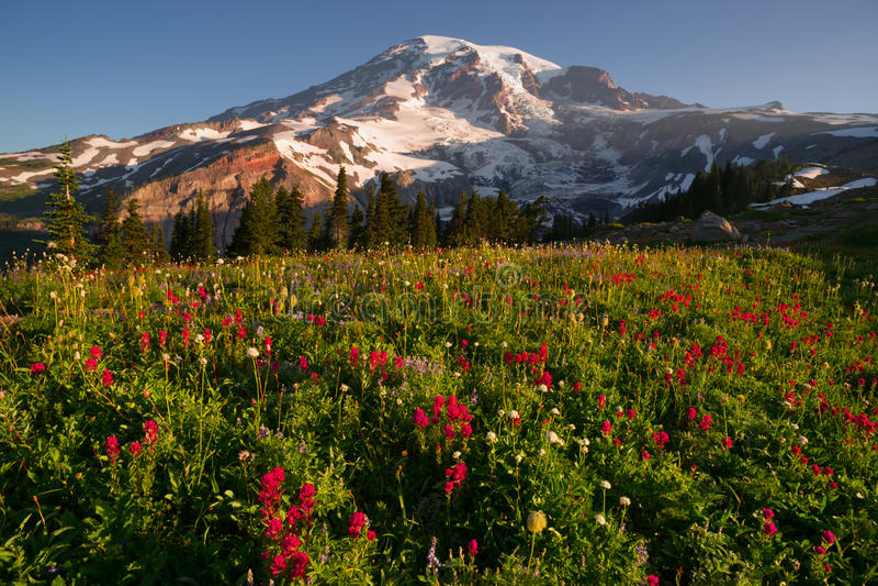 De Weide van Rainier National Park Mountain Paradise van de cascadewaaier stock foto's