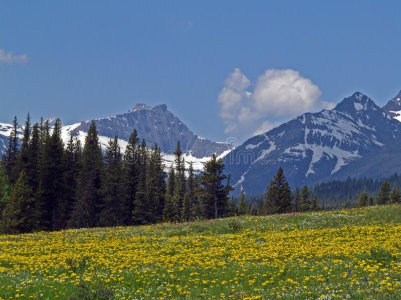 De Weide van Wildflower van de berg royalty-vrije stock fotografie