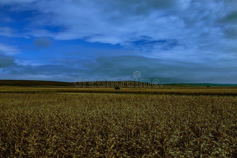 De weide in Vojvodina stock afbeeldingen