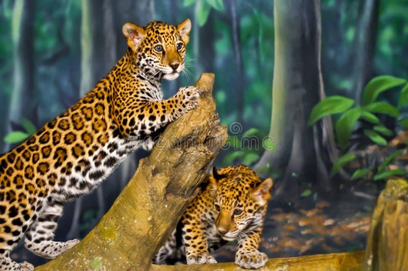 De Welpen van Jaguar royalty-vrije stock fotografie