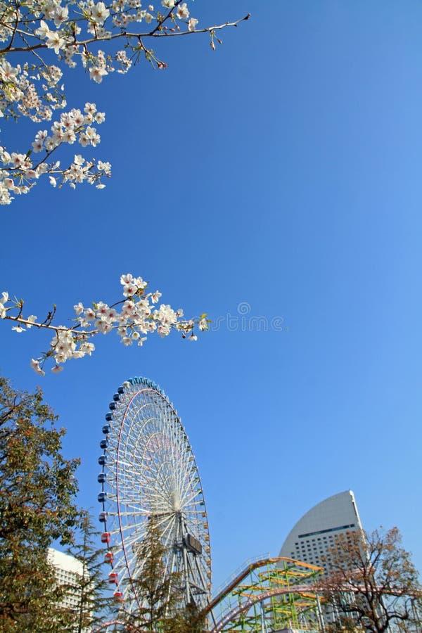 De wereld en de kersenbloesems van Yokohamacosmo in Kanagawa royalty-vrije stock afbeelding