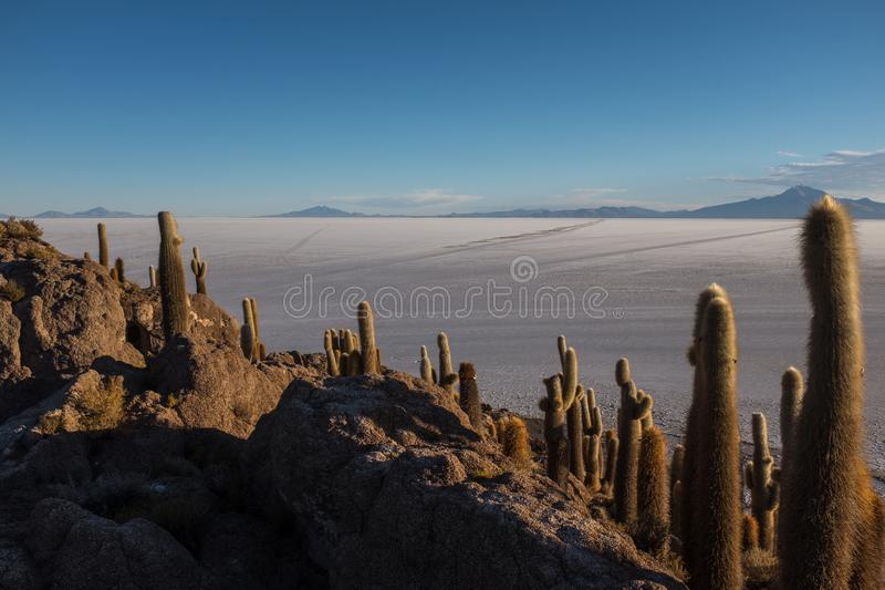 De werelden grootste zout vlak die Bolivië, Zuid-Amerika Salar de Uyuni van het unieke cactuseiland wordt gezien riepen Incahuasi royalty-vrije stock fotografie