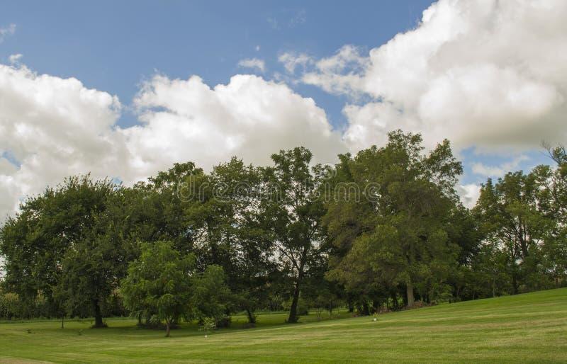 De Werf van het Land van Iowa met Groepering van Bomen royalty-vrije stock foto's