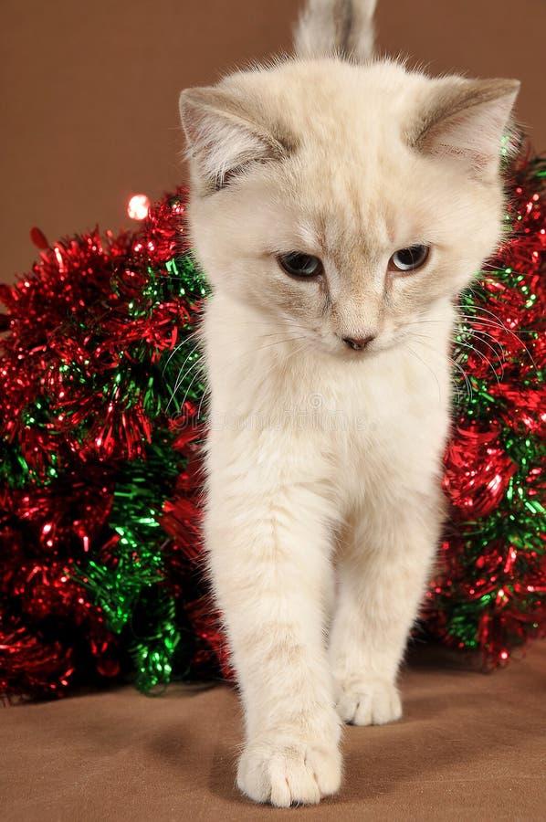 De werkelijk leuke close-up van het Kerstmiskatje stock foto's