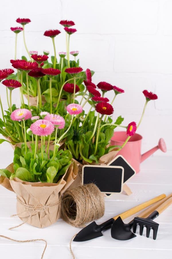 De werkenconcept van de de lentetuin Het tuinieren hulpmiddelen, bloemen in potten en gieter op witte houten lijst royalty-vrije stock fotografie