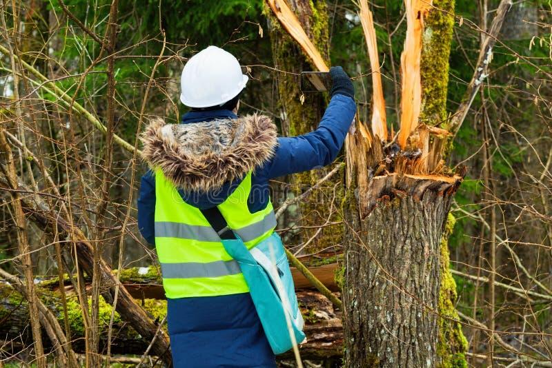 De werknemer van de vrouwenbosbouw neemt beelden van gebroken boom royalty-vrije stock foto's
