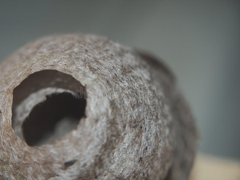 De wesp bouwt een sferisch nest Gevaarlijk insect royalty-vrije stock foto