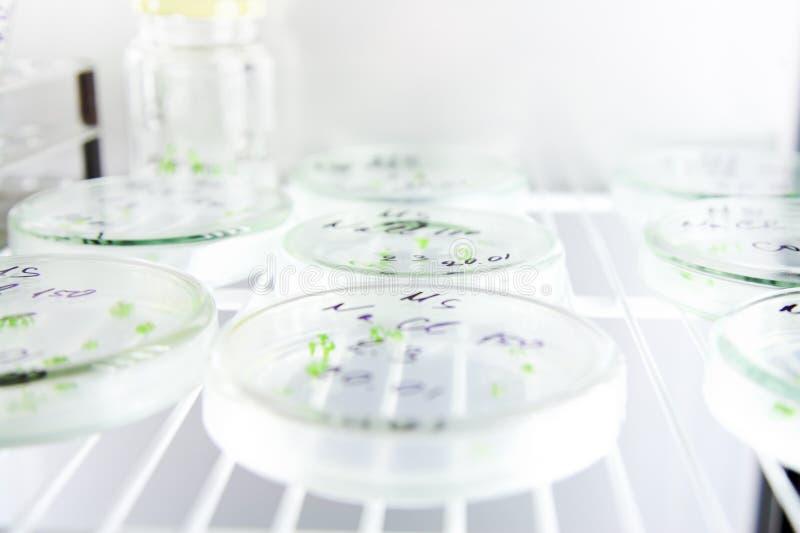 De wetenschap van de microbiologie royalty-vrije stock afbeelding