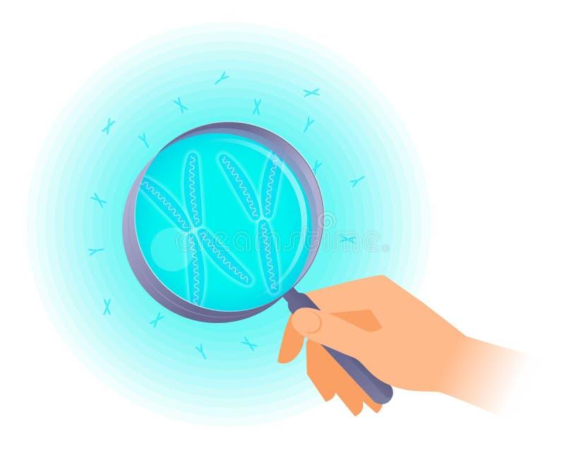De wetenschapper houdt meer magnifier en onderzoek x, y-chromosomen vector illustratie