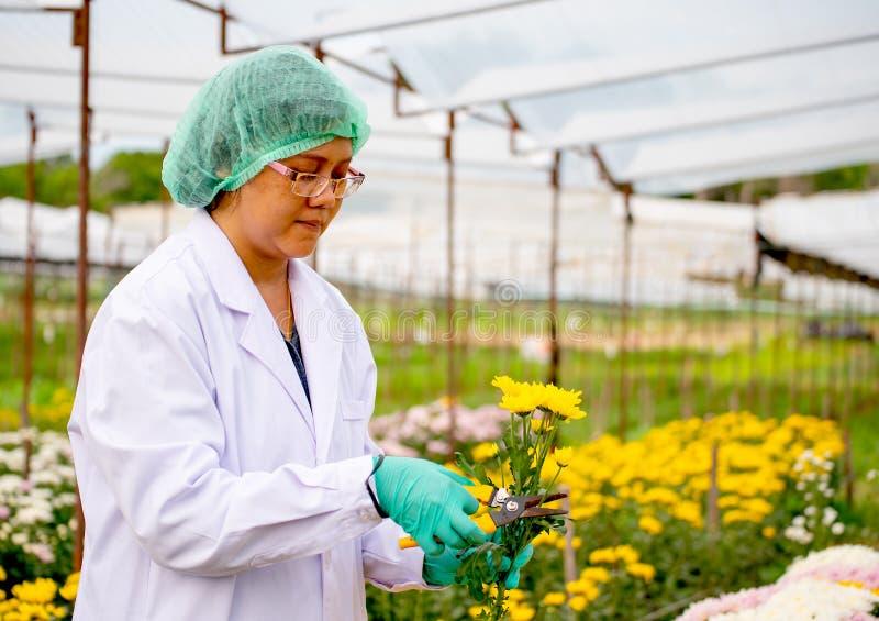 De wetenschappervrouw met de groene hoofdschaar van GLB en van het handschoenengebruik om takken van gele bloem tijdens onderzoek royalty-vrije stock foto