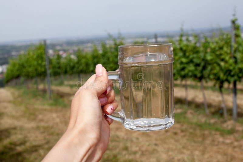 De wijn en de soda spritzer drinken verfrissing Glas witte wijn in vrouwenhand op achtergronden van Wijngaarden in Heuriger-herbe stock foto