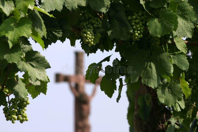 De wijn is godsdienst royalty-vrije stock foto