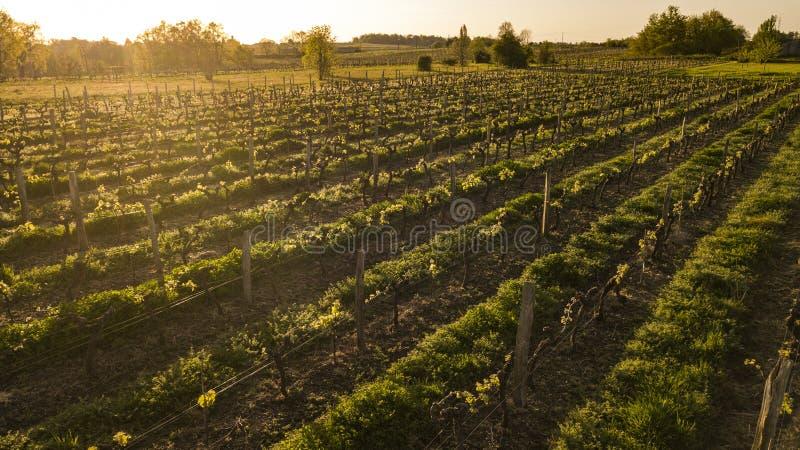 De wijngaard Aquitaine, Frankrijk van satellietbeeldbordeaux stock fotografie