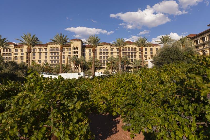 De Wijngaard bij de Groene Toevlucht van de Valleiboerderij en Kuuroord in Las Vegas, stock foto's