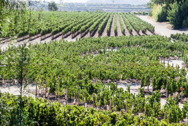 De wijngaard in Santiago doet Chili stock fotografie