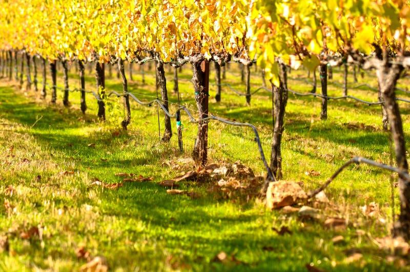 De Wijngaard van de herfst stock foto's