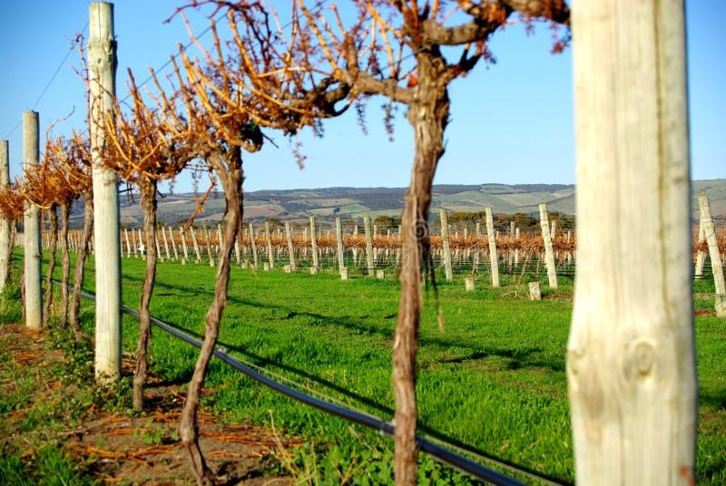 De Wijngaard van de Herfst van Aldinga royalty-vrije stock foto's