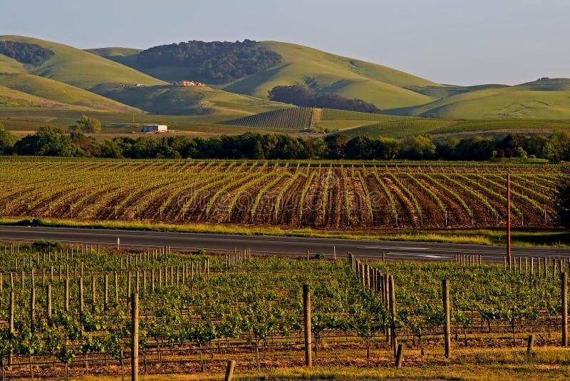 De wijngaard van de Vallei van Napa bij zonsondergang stock fotografie