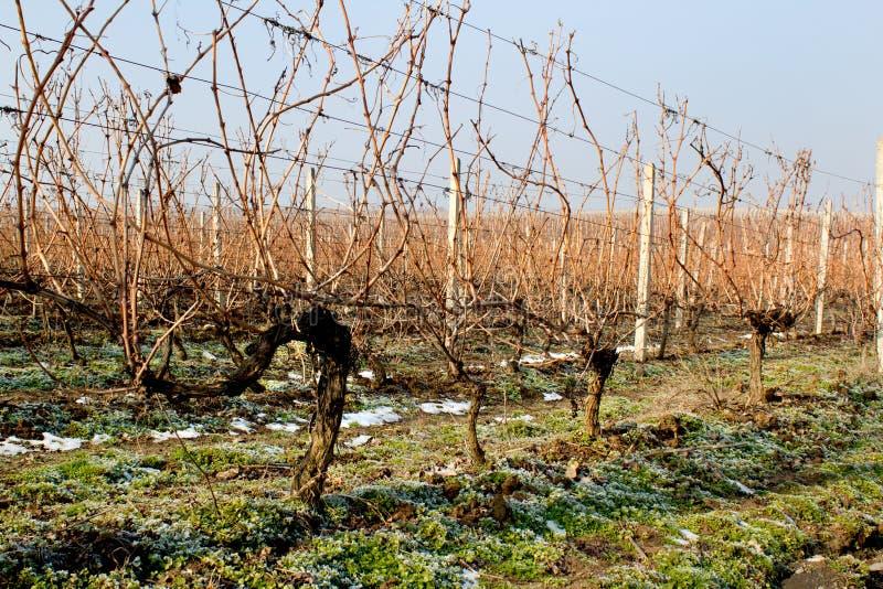 De Wijngaard van de winter royalty-vrije stock afbeelding