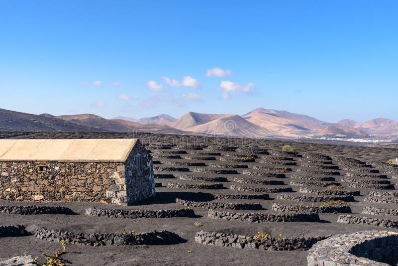 De wijngaard van La Geria op vulkanische grond, Lanzarote, Canarische Eilanden, S stock foto