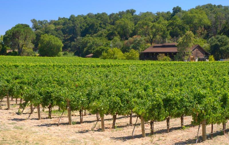 De Wijngaard van Napa stock afbeeldingen