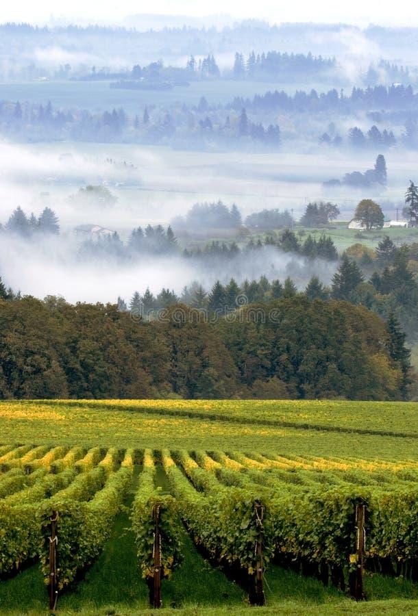 De wijngaard van Oregon in vroege ochtendmist royalty-vrije stock afbeelding