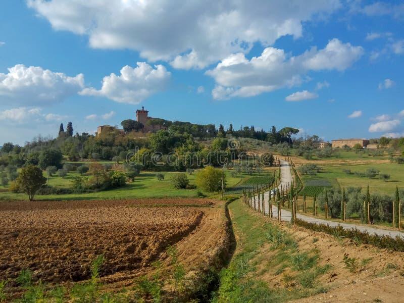 De wijngaard van Toscanië, Italië royalty-vrije stock afbeelding