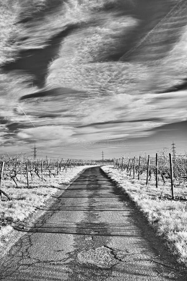 In de wijngaarden royalty-vrije stock foto