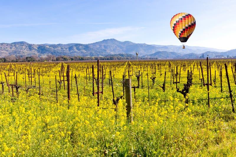 De Wijngaarden en de Mosterd van de Napavallei in de Lente royalty-vrije stock afbeelding