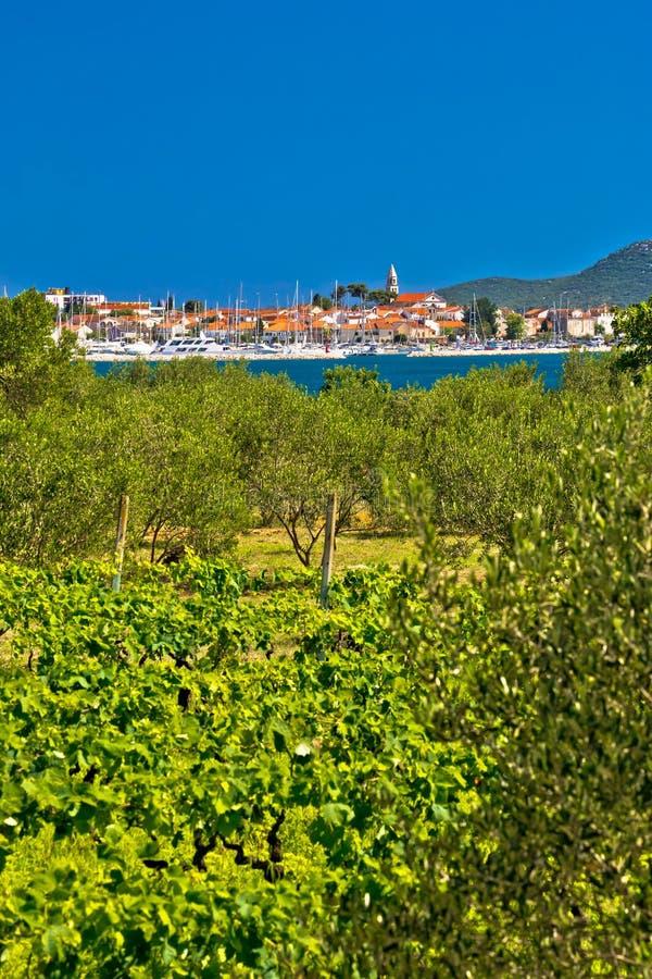 De wijngaarden en de olijfbomen van Biogradna Moru royalty-vrije stock foto