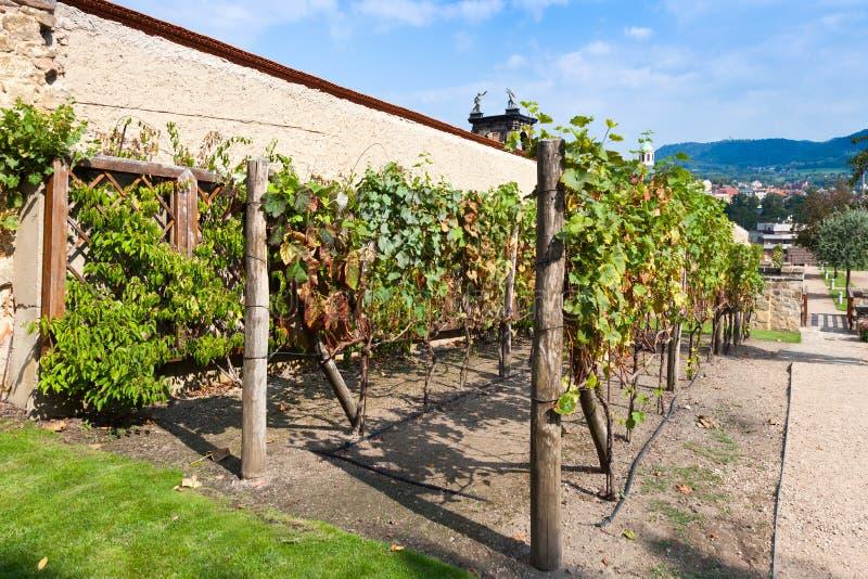 De wijngaarden, kasteel tuiniert, stad Decin, Noord-Bohemen, Tsjechische republiek stock afbeeldingen