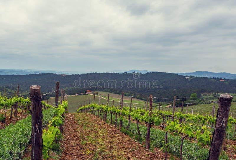 De wijngaarden van Chianti royalty-vrije stock fotografie