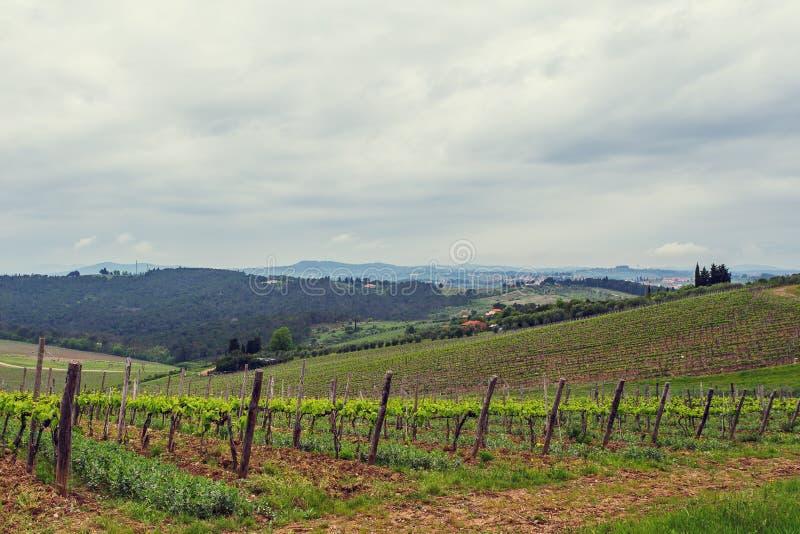 De wijngaarden van Chianti stock fotografie