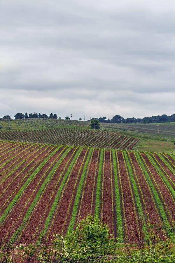 De wijngaarden van Chianti royalty-vrije stock foto