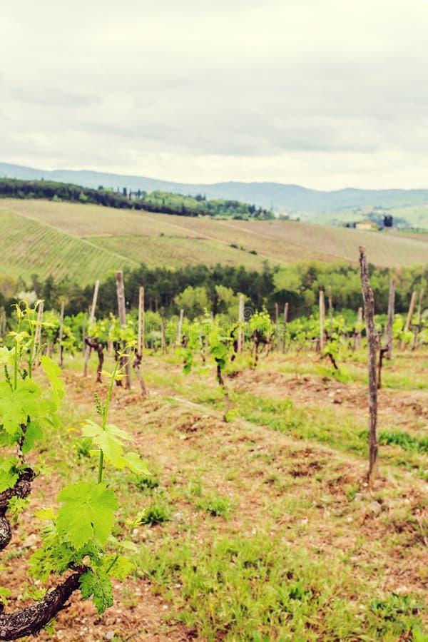 De wijngaarden van Chianti royalty-vrije stock afbeeldingen