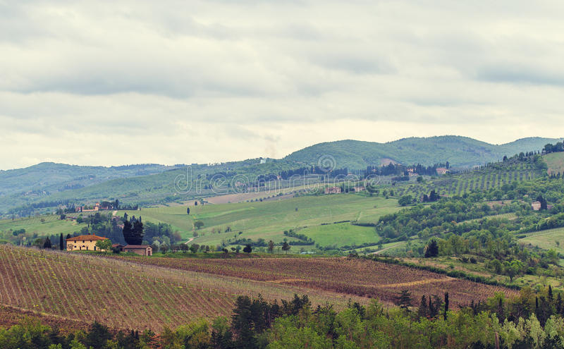 De wijngaarden van Chianti stock foto's