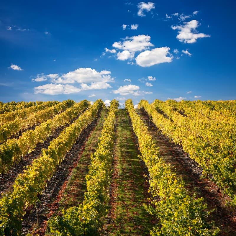 De wijngaarden van de havenwijn in Portugal royalty-vrije stock afbeelding