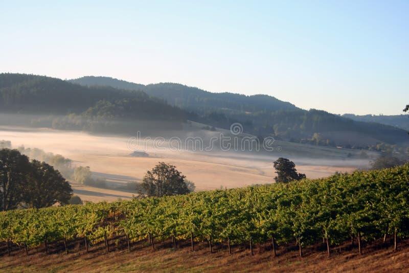 De Wijngaarden van de ochtend stock fotografie