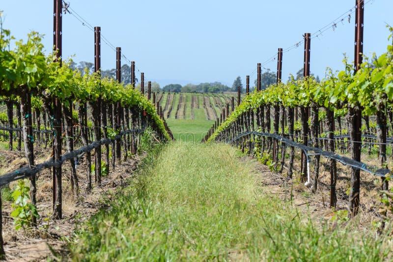 De Wijngaarden van de Vallei van Napa royalty-vrije stock foto