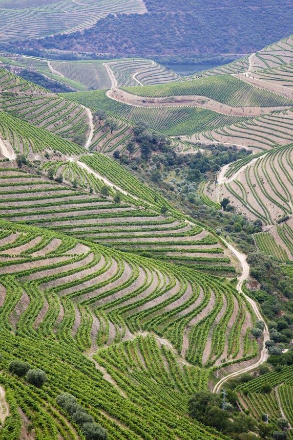 De wijngaarden van Douro - havenwijn, Porto, Portugal royalty-vrije stock foto's